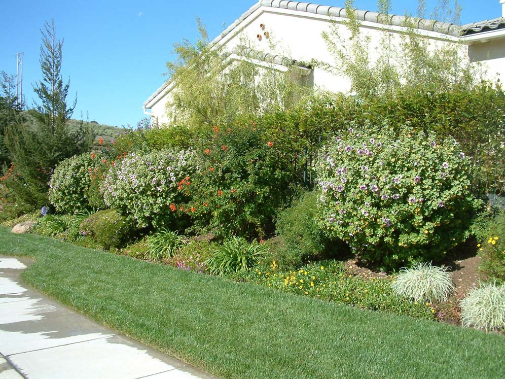 Privacy Shrub Border and Lawn Strip