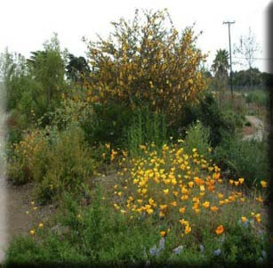 California Native Gardens