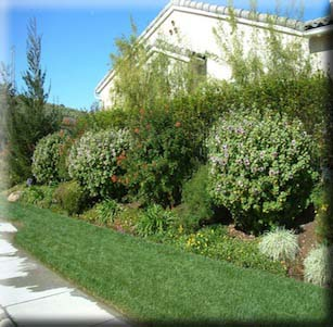 Shrub Borders