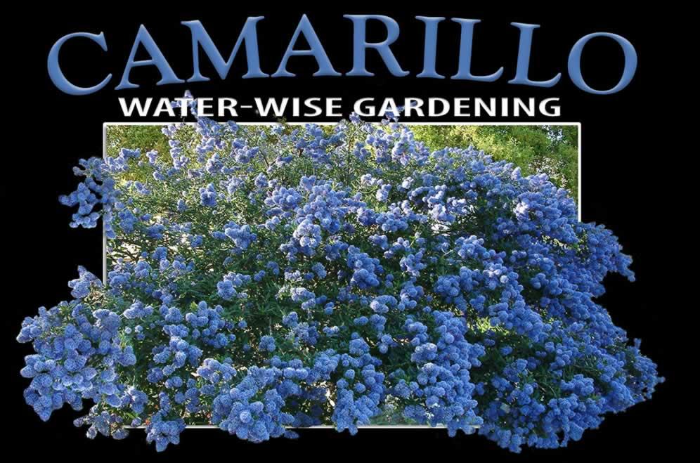 Water Wise Gardening In Camarillo